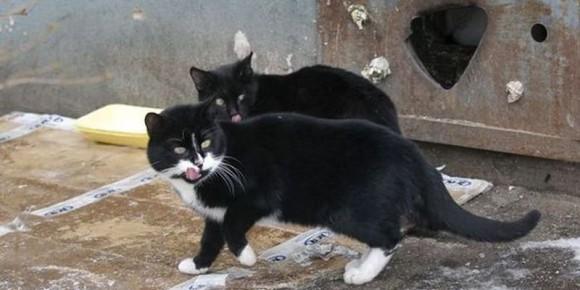 Коты раздора